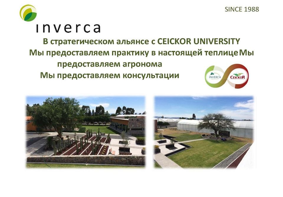 Inverca_36